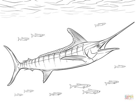 Marlin Fish Coloring Pages | realistic atlantic blue marlin coloring page free
