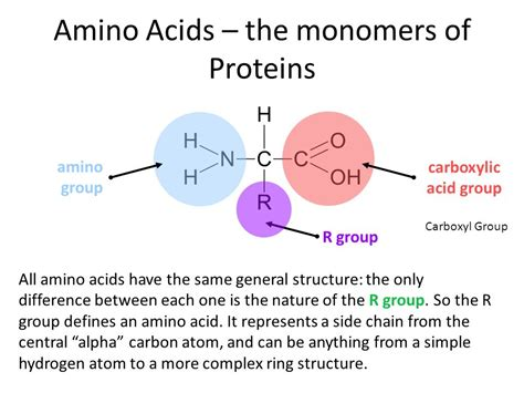protein monomer biomolecules nucleic acids and proteins ppt