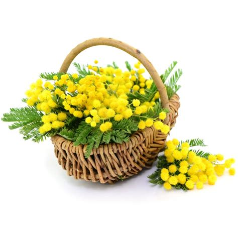 fiore delle donne comune di guarcino festa delle donne
