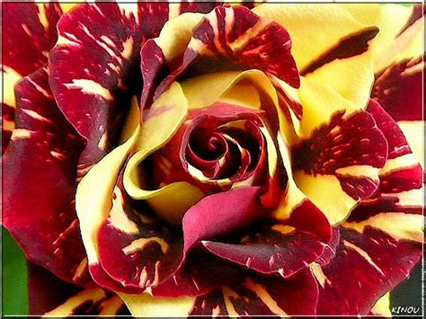 Gamis Roseflowry use a bicolor with redskins colors married to the color pallets