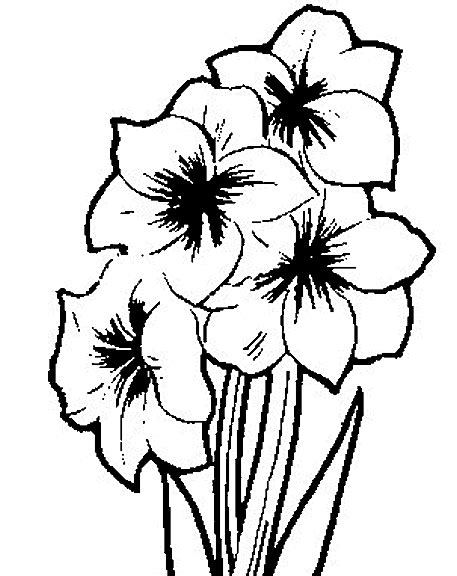 flower coloring pages coloringpagesabc com