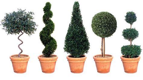 cutting edge executive living the australian - Topiary Styles