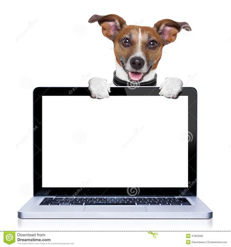 Pc Dogs computer stock photo image 47853295