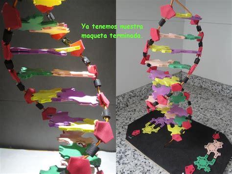 cadena de adn con limpiapipas maqueta de adn youtube