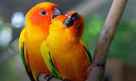uccelli esotici da gabbia pet garden vicenza verde