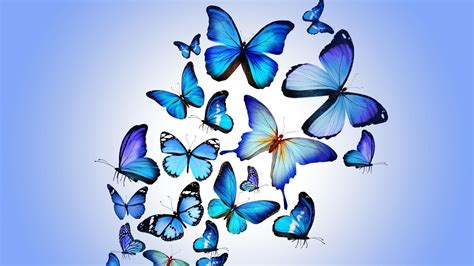 free blue butterfly download free clip art free clip art