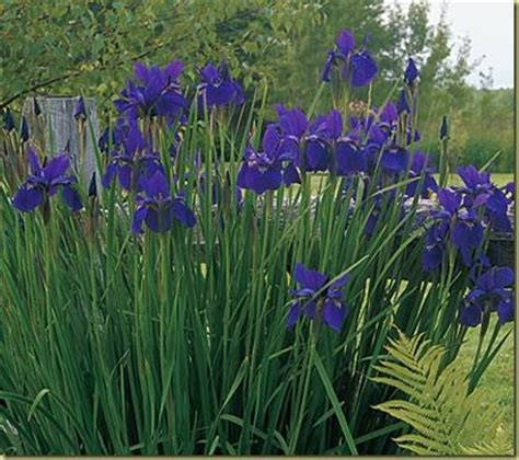 who flowers and plants always want to ut 237 l 237 ze 5 flower plants for your yard in utah outdoor