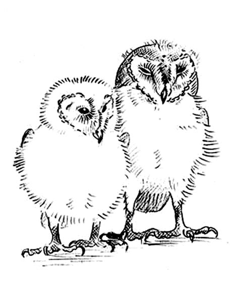 printable barn owl pictures barn owl coloring page animals town animals color