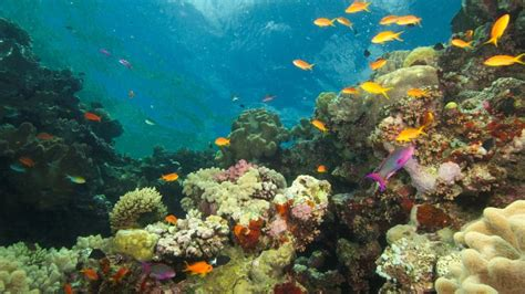 best place to dive the great barrier reef great barrier reef attractions