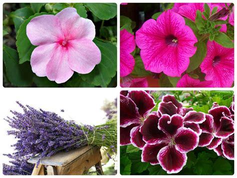 fiori da balcone estivi come arredare il balcone di casa o il terrazzo