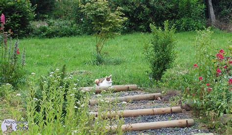 des astuces pour prot 233 ger ses plantations et semis des chats