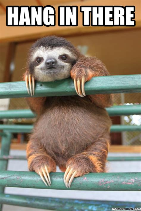 Cute Sloth Meme - sloth furball love pinterest sloth animal and