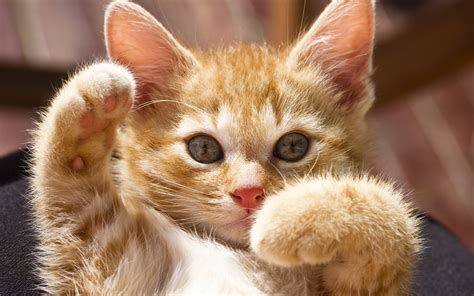 wallpaper cat paw cute cat paws wallpaper 45077 1920x1200 px hdwallsource com
