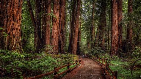 forest raindrops screensaver  youtube