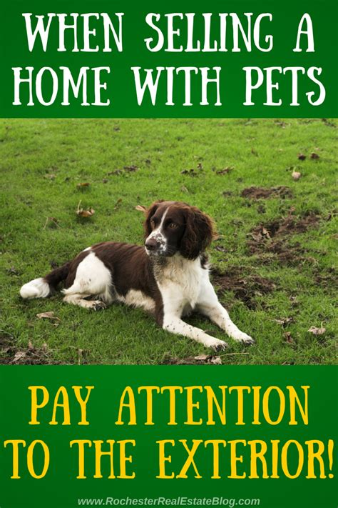 sell puppies how to sell a home with pets