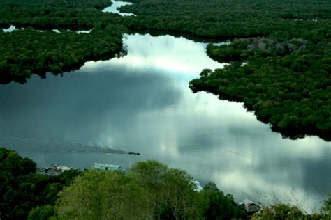 Madu Asli Kalbar madu hutan asli danau sentarum memang istimewa mongabay co id
