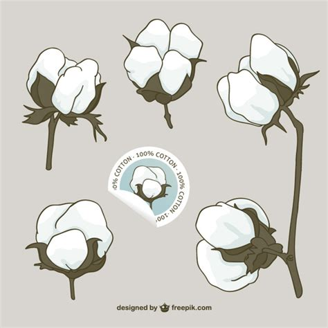 eps format bedeutung cotton flowers vector vector free download
