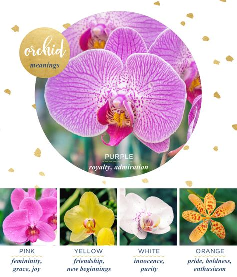 orchid color meaning orchid meaning and symbolism ftd