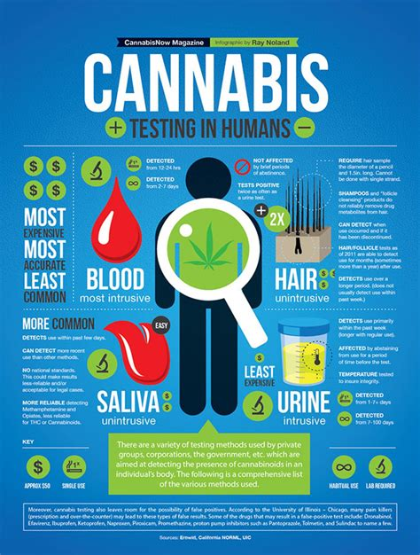 the medicinal value of terpene testing cannabis kurple magazine cannabis testing in humans visual ly