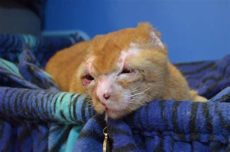 comforting cat this cat burned in a fire does something special for other