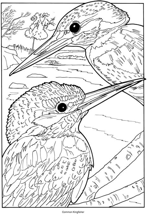 coloring pages kingfisher kingfisher animal coloring pages t8ls com
