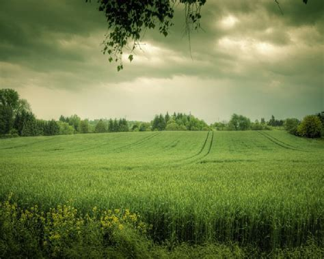 wallpaper of green fields green images green fields hd wallpaper and background