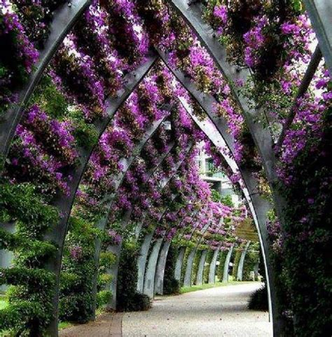 trellis florist 25 best ideas about bougainvillea trellis on