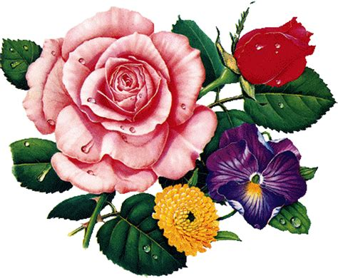 imagens de flores e rosas gifs imagens e efeitos tube flores 1