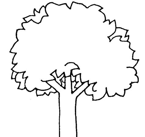 Pine Tree Outline Az Coloring Pages Tree Coloring Page Outline