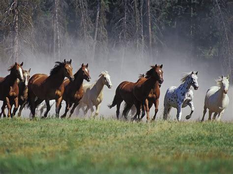 Wild Horses Hd Wallpapers