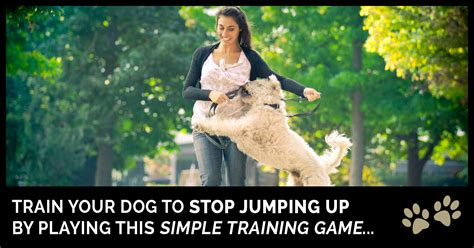 how to your to stop jumping up how to stop a from jumping on breeds picture