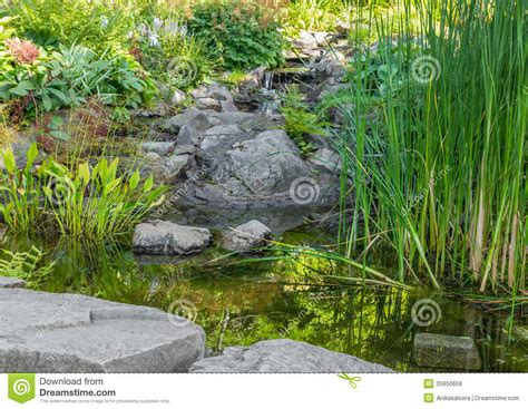 decorative pond plants garden with aquatic plants pond and decorative stones