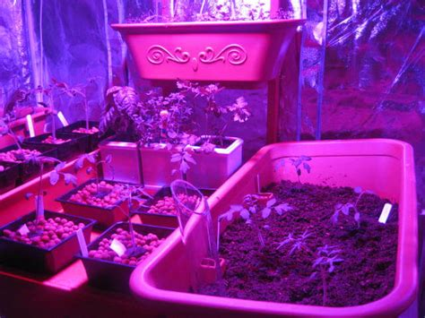 what to know about led lights all you need to know about led grow lights sumo gardener