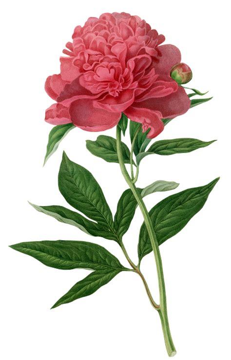 cara merubah format gambar dari png ke jpg arie cellular koleksi gambar bunga format png