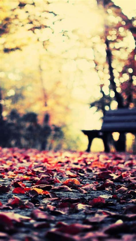 wallpaper handphone tumblr autumn leaves park bench iphone 5 wallpaper iphone