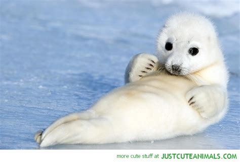 Seal Is Simply Amazing by Chilled Seal Just Animals Animals