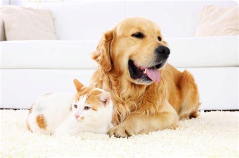 casa di riposo chio cucce di design per cani e gatti world il