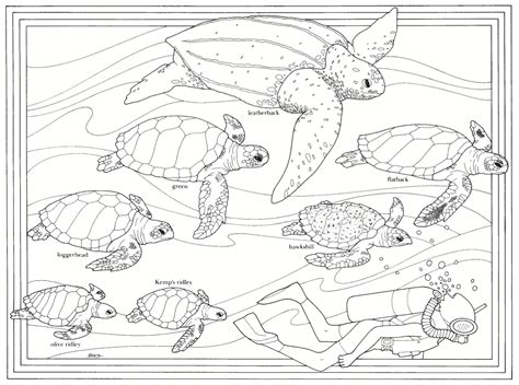 coloring pages loggerhead turtle loggerhead sea turtle coloring pages color bros