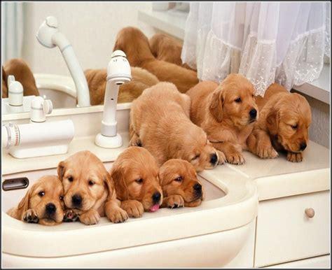 best small breeds for best small breeds for pet photos gallery jx3mmmk3lr