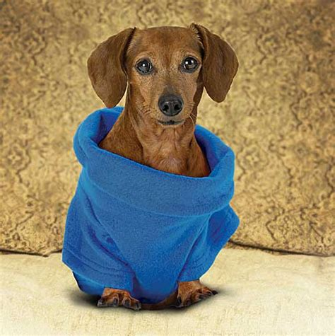 snuggie for dogs snuggie blanket for dogs