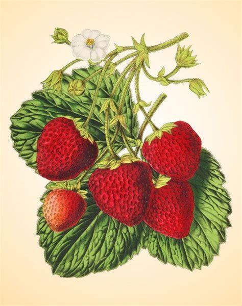 Wall Sticker Zs092 Strawberry In Garden 394 best images about plodovi on behance