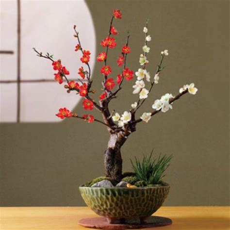 bonsai care manual cherry blossom bonsai tree care instructions virtual university of pakistan