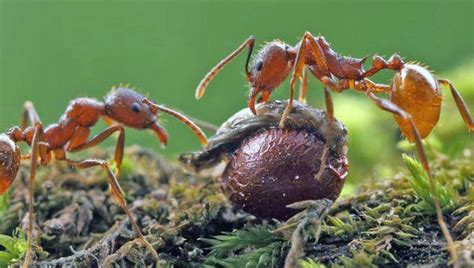 ant s hill ant s nest photo bob or marley in the 4x4 naturallyns wildland writers scotia