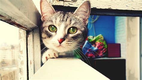 imagenes artisticas hd foto art 237 stica de gatos hd 1366x768 imagenes