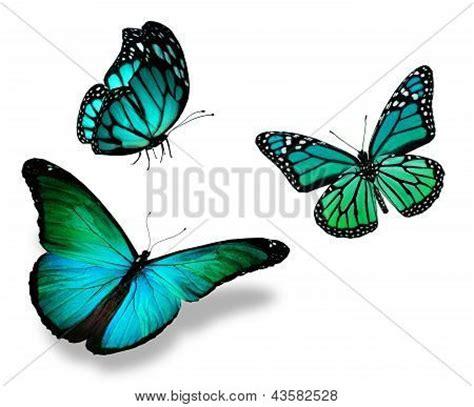 imagenes de mariposas azul turquesa mariposas turquesa para fondo imagui