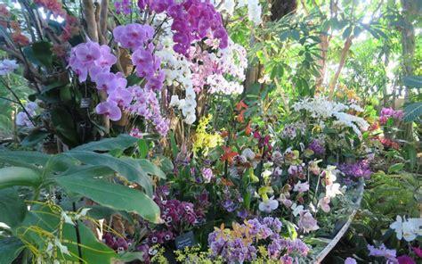 Culture Des Plantes by Sortir 224 Sous Le Charme Des Orchid 233 Es Au Jardin