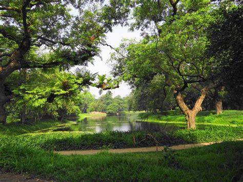 Indian Botanical Garden Indian Botanical Garden Kolkata Also Known As Jagdish Chandra Bose Indian Botanical Garden It