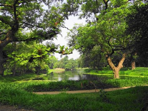 Botanical Garden Kolkata Indian Botanical Garden Kolkata Also Known As Jagdish Chandra Bose Indian Botanical Garden It