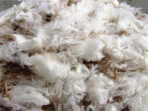 Pink Apologises To Aussie Wool Industry by Australian Wool Production Forecast To Slump 7pc Next Year