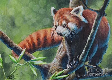 Tree Duvet Cover Red Panda Painting By Lachri